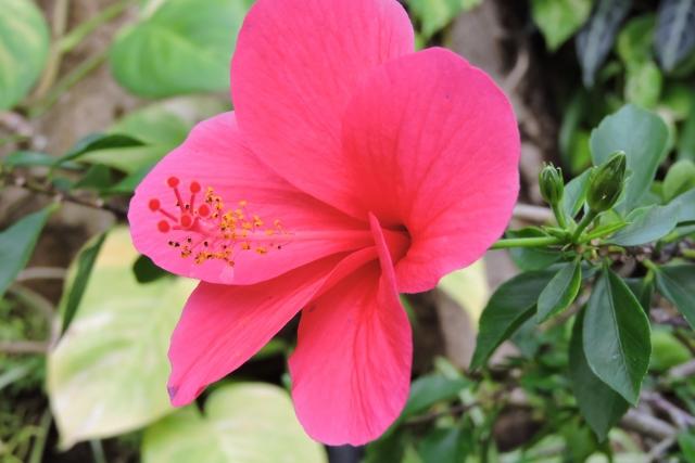 おりひめの花