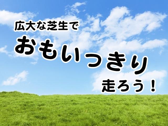 広大な芝生でおもいっきり走ろう!