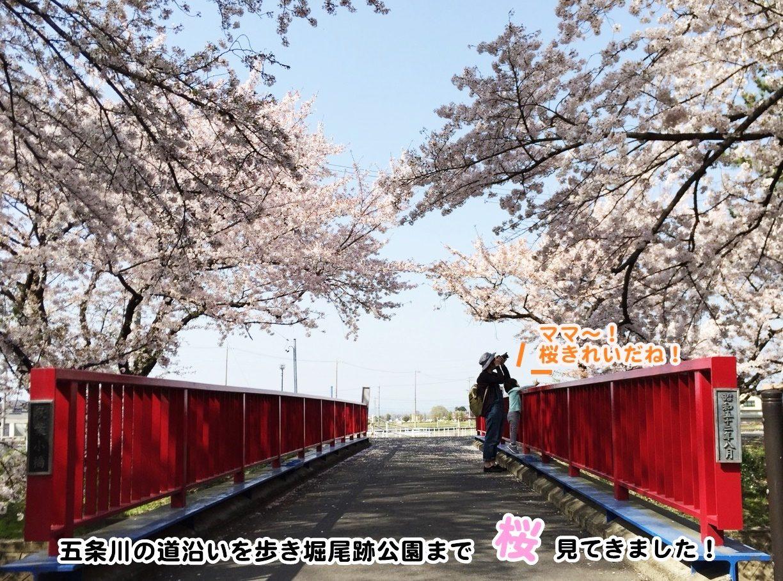 五条川・堀尾跡公園桜