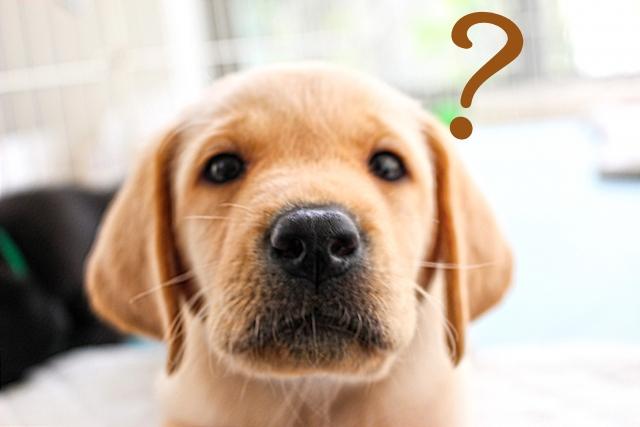 犬が吠える理由とは?