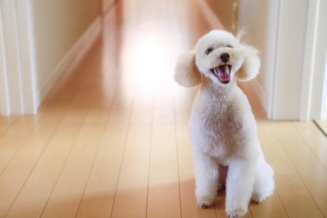 廊下にいる犬