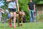 飼い主について歩く犬