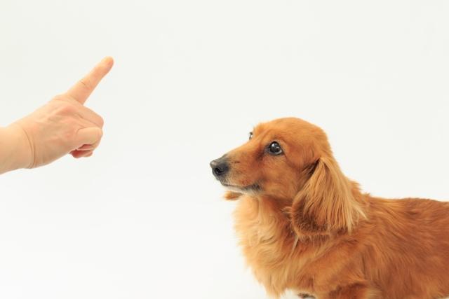 犬への指示