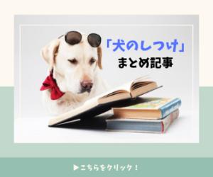 犬のしつけまとめ記事