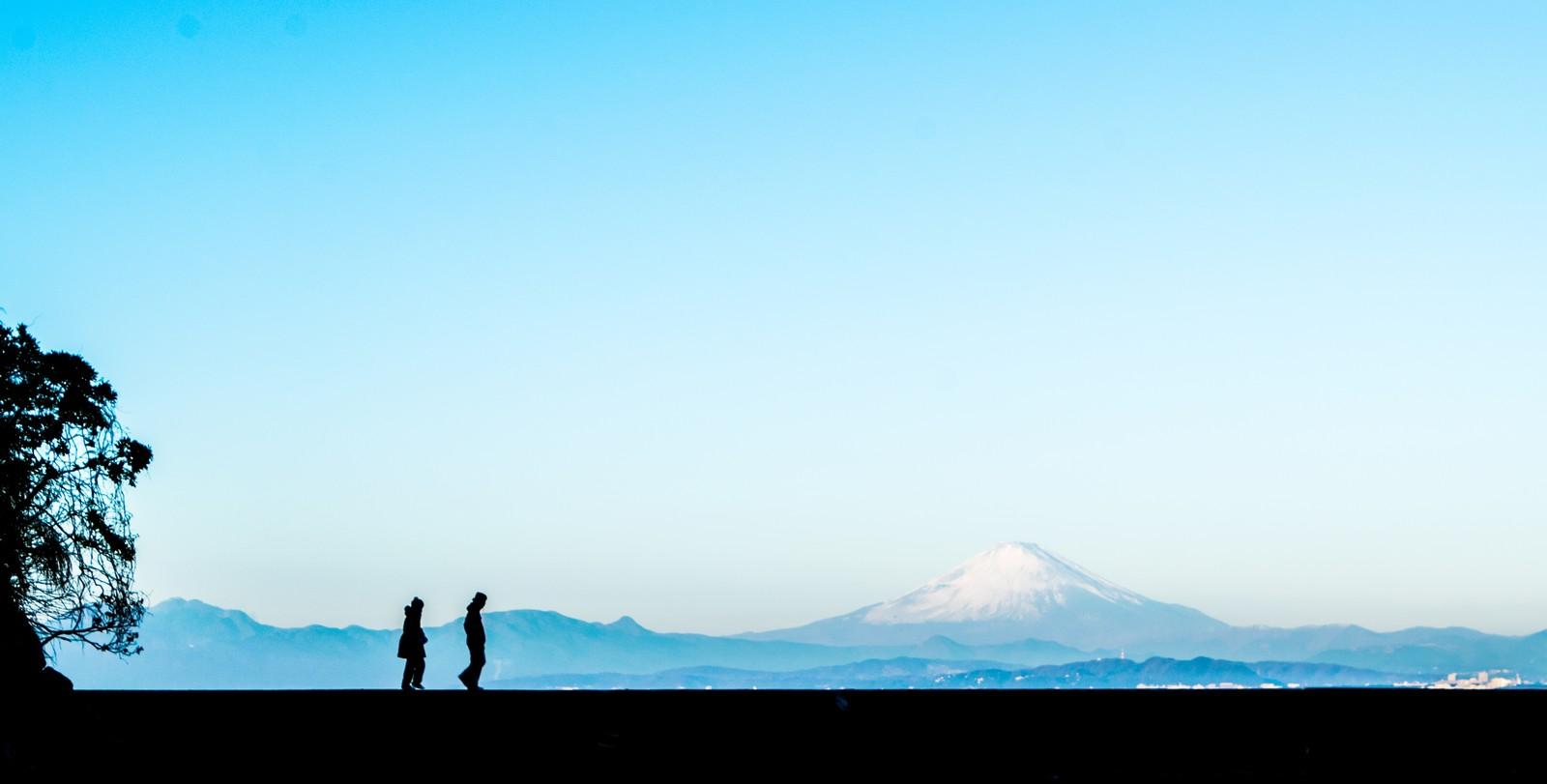 鮫島純子が日課にした散歩