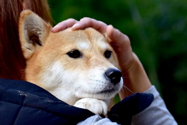 犬のご褒美・撫でてもらう