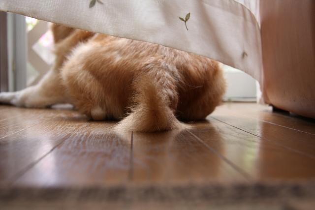 犬とカーテン