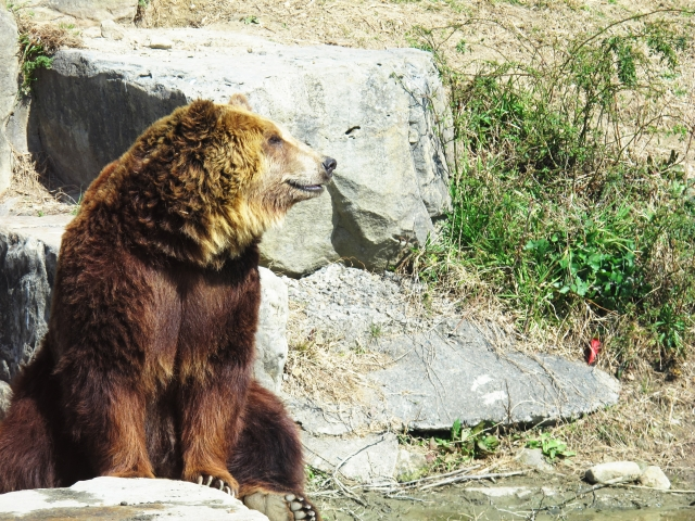 アドベンチャーワールド・熊