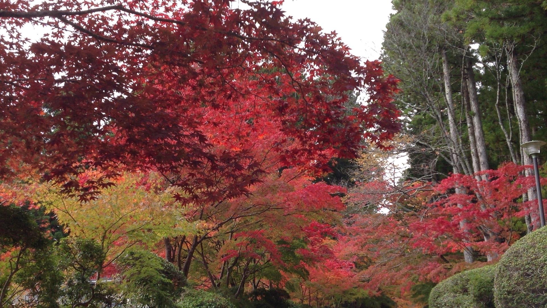 奥の院の紅葉